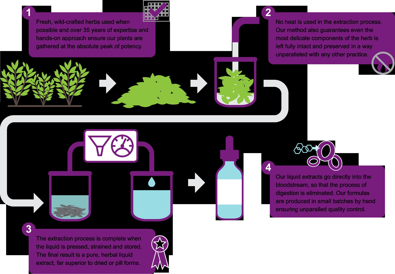 Desert Willow_Process Graphic